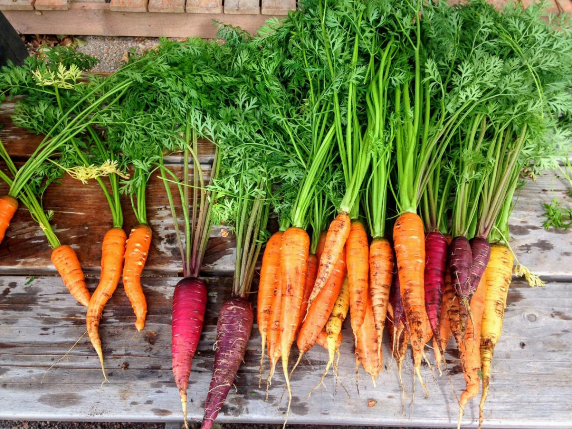 Carrots of the Family Farmers Network